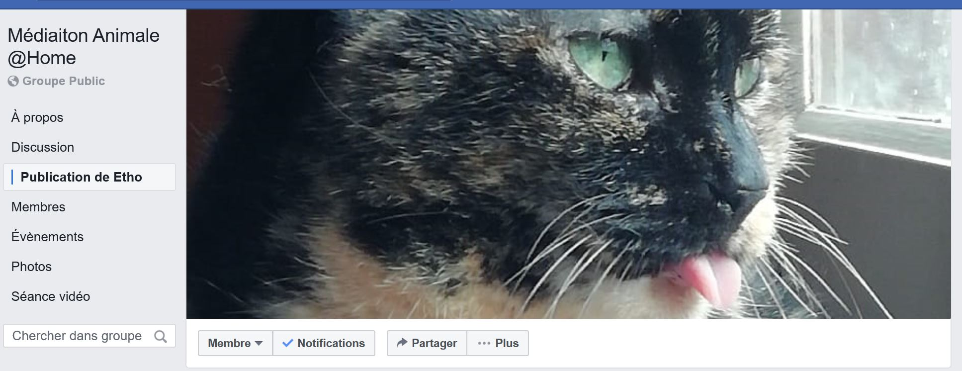 groupe Facebook Mediaiton Animale Home